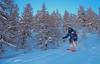 American Trees (David Roberts 01341) Tags: verbier bruson skiing offpiste horspiste freeride winter snow suisse switzerland bagnes powder trees