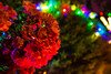 Flowers at night (LachMH) Tags: canon 700d rebel t5i 1855mm lens long exposure lights christmas night nighttime holidays canberra cbr gordon flowers pink bokeh