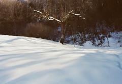 (Rastislav Durica) Tags: analog analogue film kodakgold200 canoneos500n landscape tree lightshadows