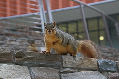 193/365/3480 (December 21, 2017) - Squirrels in Ann Arbor on the First Day of Winter at the University of Michigan (December 21st, 2017) (cseeman) Tags: gobluesquirrels squirrels annarbor michigan animal campus universityofmichigan umsquirrels12212017 winter eating peanut decemberumsquirrel umsquirrel snowsquirrels snow snowy 2017project365coreys yeartenproject365coreys project365 p365cs122017 356project2017