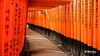 Fushimi Inari-Taisha // 伏見稲荷大社 (B. Weihe Photography) Tags: benjamin weihe b photography canon eos 700d japan reise 2017 kyoto fushimi inaritaisha 伏見稲荷大社 shinto schrein shrine scarlet torii rote scharlachrot shintō