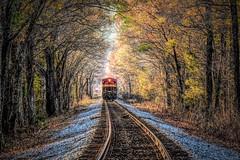 Westward Bound (VarietyHour) Tags: tree railroad forest train tracks