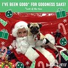 Boo Lefou's First Photo With Santa! (DaPuglet) Tags: santa christmas pug pugs dog animal animals pet pets santaclaus dogs petsmart