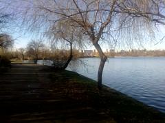 14122017952 (felixp7) Tags: bucharest bucurești park plumbuita lake trees alley