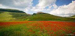 Castelluccio di Norcia (omar.morganti) Tags: castellucciodinorcia fioritura castelluccio norcia