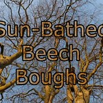 Sun-Bathed Beech Boughs (Slideshow) thumbnail