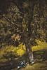 Cam & Aur (TheSlaYan) Tags: gente tonos outdoor retrato