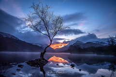 Lone Tree (deanallanphotography) Tags: travel landscape tree water mountain photography colors ngc uk sunrise wales snowdonia lake