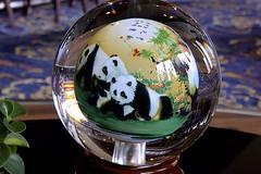 Magnificent Snuff Bowl (oxfordblues84) Tags: peoplesrepublicofchina china yangtzerivercruise yangtzeriver oat overseasadventuretravel victoriacruises victoriajennacruise victoriajenna riverboatcruise giantpanda panda pandaglassbowl snuffpainting snuffbottle snuffbowl bowl glass art