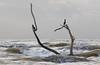 Cormorants (dennis_plank_nature_photography) Tags: padreislandnationalseashore cormorants avian birds nature