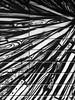 Wien (Harald Reichmann) Tags: wien stadt linkewienzeile naschmarkt stadtbild alltagskunst linie muster bild schwarz weiss