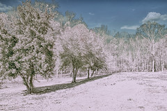 The Pink Snowfall on Earth 2 (Thomas Vasas Photography) Tags: nature scenics winterscapes snowscapes snow winter seasons planets alienworlds astronomy earth2 alienskies