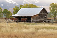 Chambers Homestead Stable (Larry Myhre) Tags: grandtetonnationalpark tetons scenic wyoming chambershomestead shed horses mules animals stable