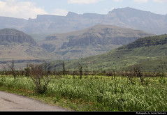 Injisuthi Valley, Drakensberg, South Africa (JH_1982) Tags: injisuthi valley drakensberg drakensberge ukhahlamba great escarpment nature landscape scenery scenic central mountains mountain range 德拉肯斯堡山脉 ドラケンスバーグ山脈 드라켄즈버그산맥 south africa rsa za südafrika sudáfrica afrique sud sudafrica 南非 南アフリカ共和国 남아프리카 공화국 южноафриканская республика جنوب أفريقيا