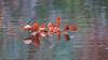 Drifting - einfach mal treiben lassen (ralfkai41) Tags: autumn autumncolours herbst woods wasser blätter wald reflexion flus herbstblätter autumnleafs river forest spiegelung leafs herbstfarben woodölands water