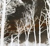 not a creature was stirring ..... (Edinburgh Nette ...) Tags: trees silhouette woodland tracery landscapes inverted dm