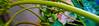 A Rainy Day ;) (Guilherme Alex) Tags: rain drops nature green leafs life garden mycity mylife amateur art cellphone samsung wet macro beautiful colorful myworld unique photography