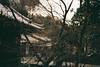清水寺 (Rayu Lin) Tags: 京都 日本 清水寺 kyoto japan konica konicac35 konicac35ef lomography lomographynegative400 film 底片相機 kiyomizudera きよみずで 失焦 outoffocus フィルム 135film きょうとし filmphoto