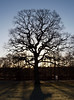 2017_12_0352 (petermit2) Tags: backlit silhouette tree clumberpark clumber sherwoodforest sherwood nottinghamshire nationaltrust nt