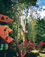 Skytrex Melaka - Botanical Garden - http://4sq.com/20LyxRV #skytrex #green #nature #tree #grass #travel #holiday #holidayMalaysia #travelMalaysia #Asian #Malaysia #Malacca #大自然 #草 #树木 #旅行 #度假 #马来西亚旅行 #马来西亚度假 #亚洲 #马来西亚 #发现马来西亚 #发现大马 #自游马来西亚 #马六甲