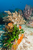 Sahoung I - 3 (Rhapsody-In-Blue) Tags: indonesia indonésie sulawesi célèbes manado gangga ganggaisland bangka bangkaisland underwater sea underwaterambiance wideangle grandangle paysage ambiance canon1740mm sealife marinelife sahoungi sahoung corals coral sponge sponges éponges éponge corail coraux