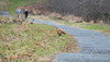 run for dear life! (long.fanger) Tags: canadageese centreville virginia redfox utilityeasement walkers wetland