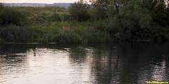 Традицонное вчернее купание.