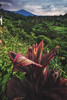 Indonesia - Tetebatu Sunrise (030mm-photography) Tags: rot indonesien tetebatu reisfelder rinjani vulkan reise landschaft natur landscape nature lombok ricefield rice travel asia asien volcano