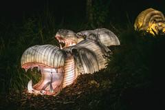 Wild Lights (Strangelove 1981) Tags: 2017 dublinzoo ireland wildlights zoo night lights glow light animals festival hippo hippopotamus