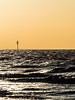 Golden Glow (Nigel Wallace1) Tags: hunstanton eastanglia beach coastal sunset goldenlight goldenhour silhouette horizon sea the wash norfolk cormorant seabirds evening backlit nature natureatitsbest beautyinnature olympus olympusuk omdem1mk11 40150 pro