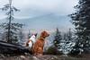 (averianovaa) Tags: dog dogphotographer doggy pet animal