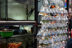 Goldfish Market (Mong Kok, Kowloon, Hong Kong) (Free For Commercial Use (FFC)) Tags: goldfishmarket market goldfish mongkok kowloon hongkong freetravelimage world adventure escape travel freedownload freeforcommercialuse creativecommons creativecommonsattribution