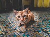 // 1.5.7_Cat at TBR taken with A7 // (tomsweisiong) Tags: flickr light exposure experiment setapak blue yahoo 2017 long picture landscape malaysia kualalumpur kuala lumpur tbr world asia color image tags cat pet animal phone phonegraphy kitten cute eye