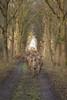 Edelherten Oostvaardersplassen (Alex Verweij) Tags: wild bos alexverweij edelherten natuur nature walking schuw hiding oostvaardersplassen almere