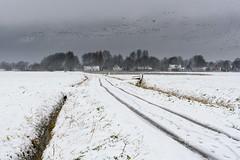 Into the snow (Ellen van den Doel) Tags: december natuur netherlands winter nature overflakkee nederland outdoor weather cold holland 2017 road landschap koud weg project sneeuw landscape snow goeree weer goedereede zuidholland nl