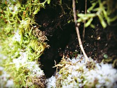 Welcome to the Burrow... (Sea of Silence) Tags: nature snow outdoors magical fairy green closeup trees