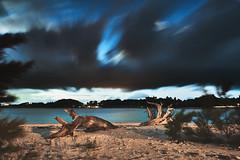A tree (Yuta Uch) Tags: exposure longexposure slow shutter clouds cloudscape sea ocean seashore seascape