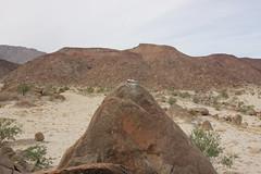 IMG_5190 (Gibrán Nafarrate) Tags: laguna salada bajacalifornia lagunasalada baja vw volkswagen desert desierto nature camping canon