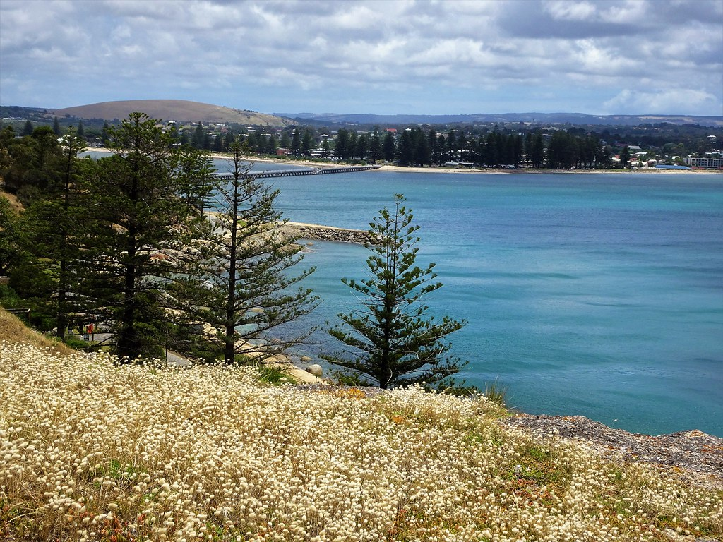 Victor Harbor. The town and its Norfolk Island pine trees  from Granite Island.