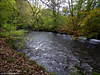 The River Teign (ExeDave) Tags: p1100137 river teign valley dunsford woods naturereserve nr devon sw england gb uk beech oakwood woodland watercourse landscape october 2017 autumn nationalpark np wildlifetrust reserve
