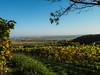 Blick über die Pfalz / View of palatinate (A.Dragonheart) Tags: landschaft landscape himmel sky blau blue weinberge vine vineyard weinrebe rebe grapevine gelb yellow grün green pfalz rheinlandpfalz palatinate rhinelandpalatinate herbst autumn fall