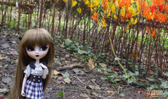 Yuno (Lunaria Nfield) Tags: yuno pullip henri groove doll custo custom wig leeke lunaria nfield askadalya dolls pullips hobby