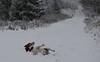 Bliadhna Mhath Ur! Happy New Year! x (0055) (Karantez vro) Tags: jack russell terrier nikon d3300 35mm f18 scotland ecosse schottland
