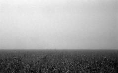 Lost horizon (Rosenthal Photography) Tags: dezember nebel herbst bnw schwarzweiss anderlingen natur asa400 20171202 ff135 städte feld ilfordhp5 bw olympus35rd analog rodinal150 dörfer siedlungen landscape nature fog mist december winter blackandwhite mood 35mm fields olympus olympus35 35rd fzuiko zuiko 40mm f17 ilford hp5 hp5plus rodinal epson v800 bachyard losthorizon horizon