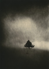 Solitaire (micalngelo) Tags: alternativeprocess alternativephotography analog filmphoto tree lithprint lithprocess moerschlith montana