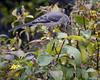 Birds eye view... (mark owens2009) Tags: mockingbird birdseyeview