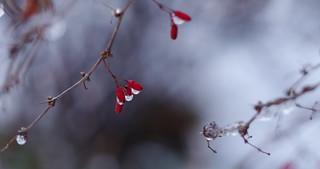 Santa Claus - a version of nature ;)