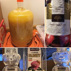 Passionfruit Mead (found_drama) Tags: passionfruit mead melomel tildegravitywerks homebrew homebrewing meadmaking essexjunction vermont vt 05452