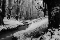 beltza (aingerubidaurreta) Tags: forest trees gorbea paisaje paysbasque snow euskalherria euskadi europe basoa basquecountry bizkaia beautiful cold winter river
