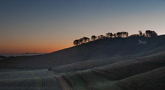 Horse and Trees in Wiltshire, England (Mike Penlington) Tags: cherhill landscape whitehorse wiltshire dawn sunrise white horse chalk ancient stars night marlborough calne mikepenlington mikepenlingtonphotographycom hill